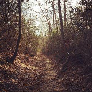 """Bridle Path"""